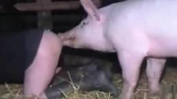 Похотливая зоофилка трахается со свиньей зоо порно