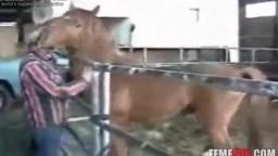 Мужик долбится в жопу с большим конем зоо порно зоофилов
