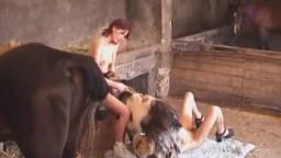 Две зоофилки отсасывают у козла с рогами и бородкой