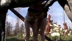 Две похотливые зообляди делают минет коню на природе зоо порно онлайн