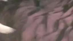 Черный кобель лижет бритую пизду голой извращенки зоо порно