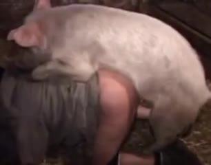 Porno zoo возбужденный грязный хряк трахает зоофилку в сарае